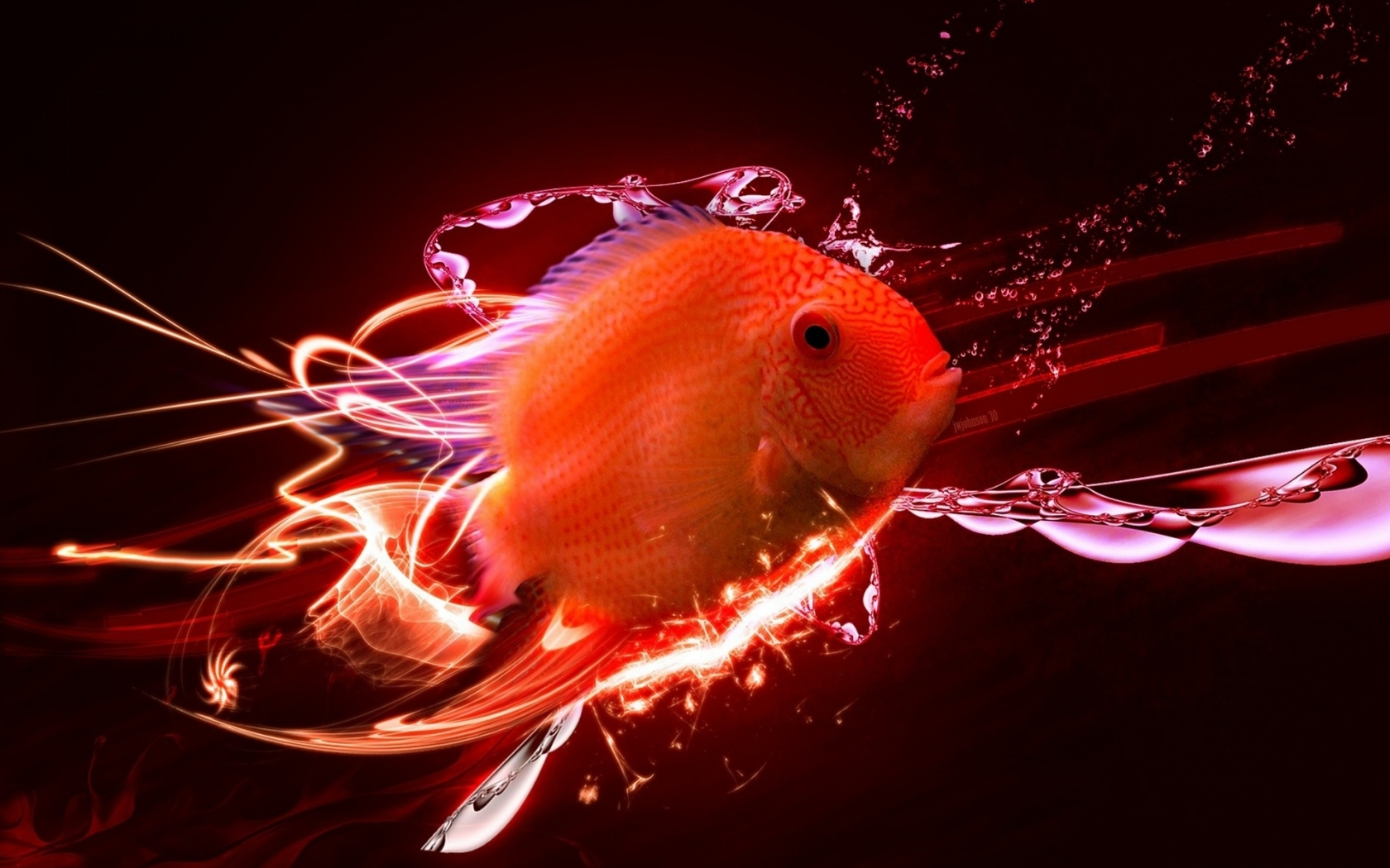 High Definition Gold Fish Wallpapers