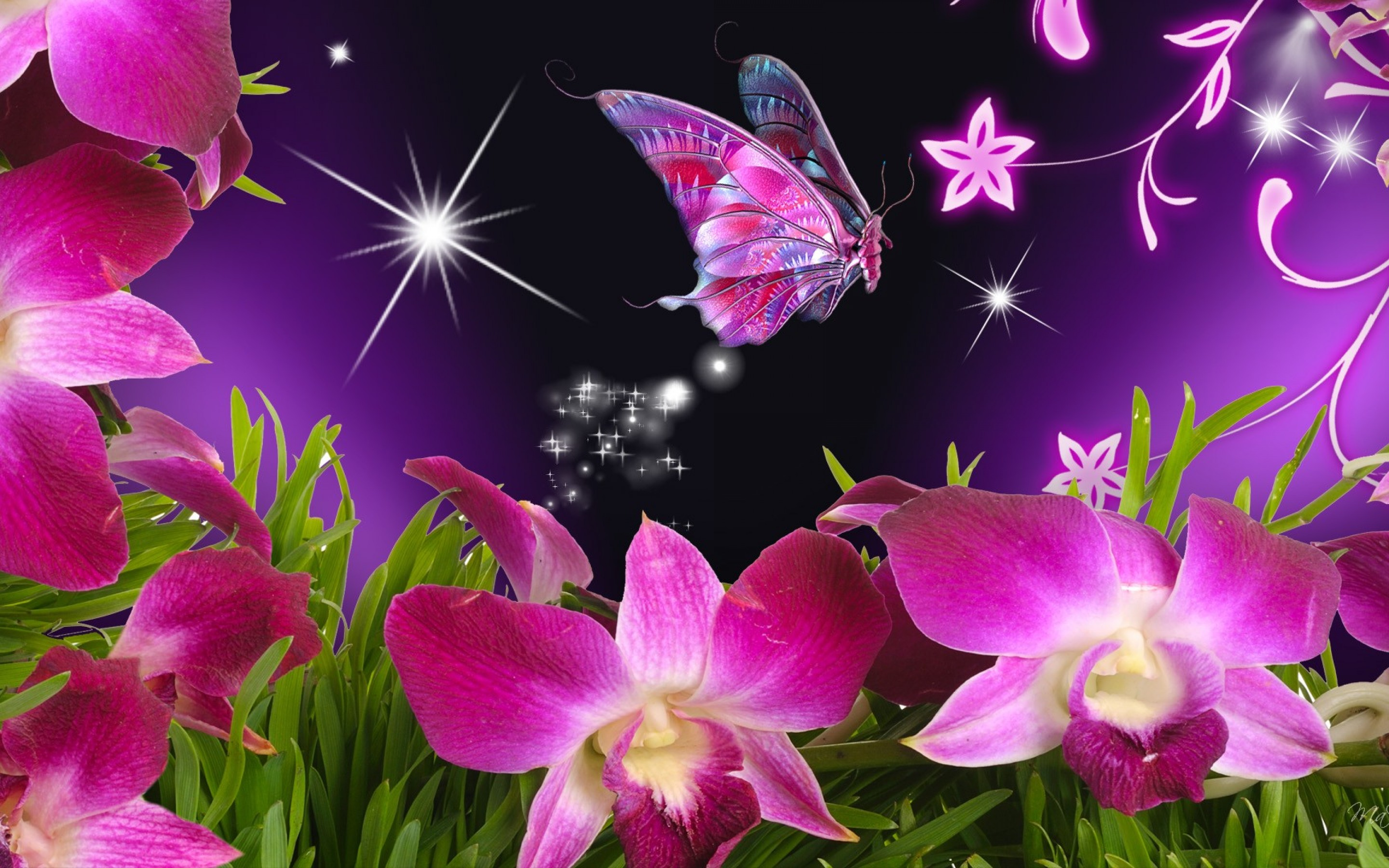 Butterflies High Resolutions Wallpapers