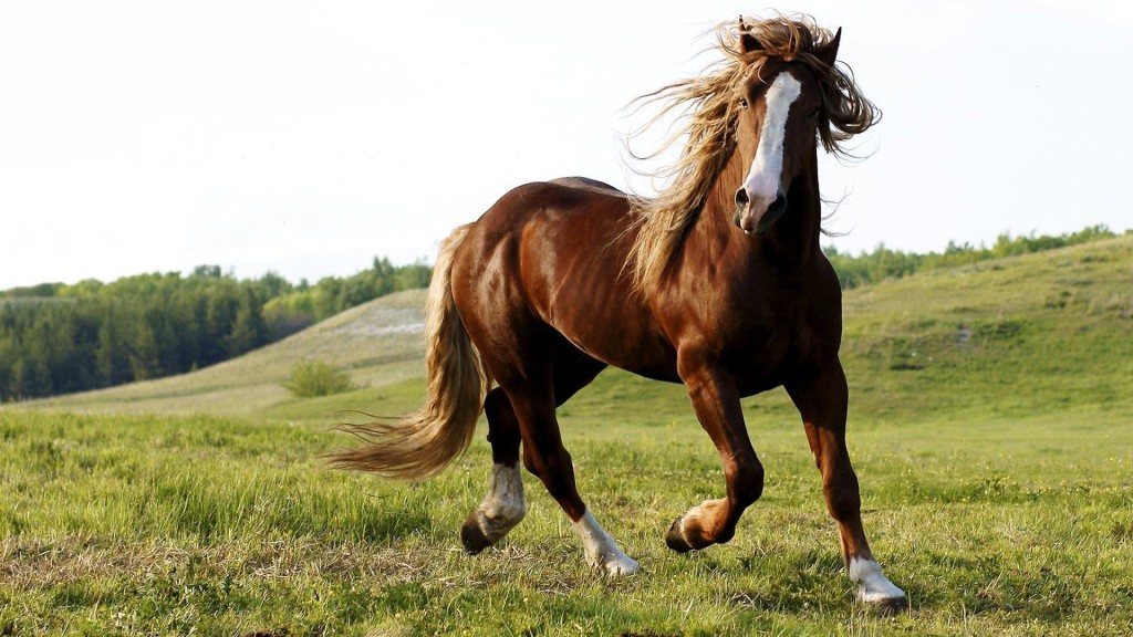 Horses High Definition Wallpapers