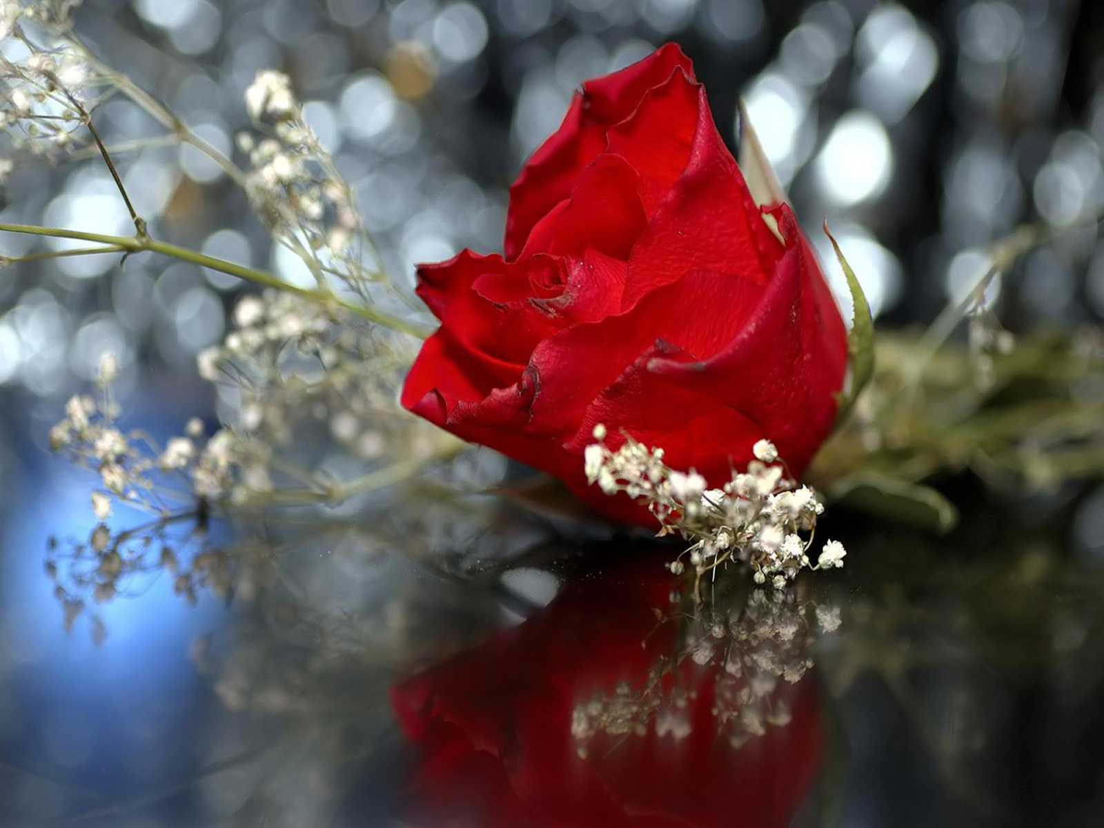 Red rose wallpapers - Red rose flower hd images ...