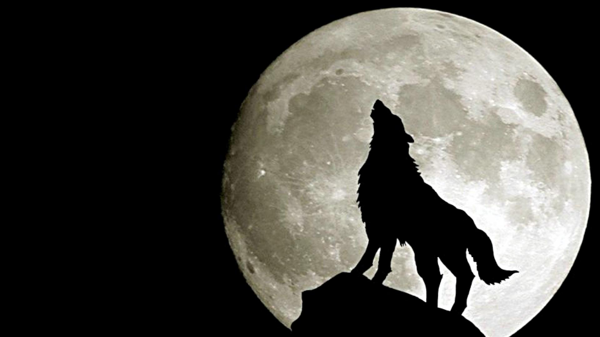 Wolf HD Wallpapers.
