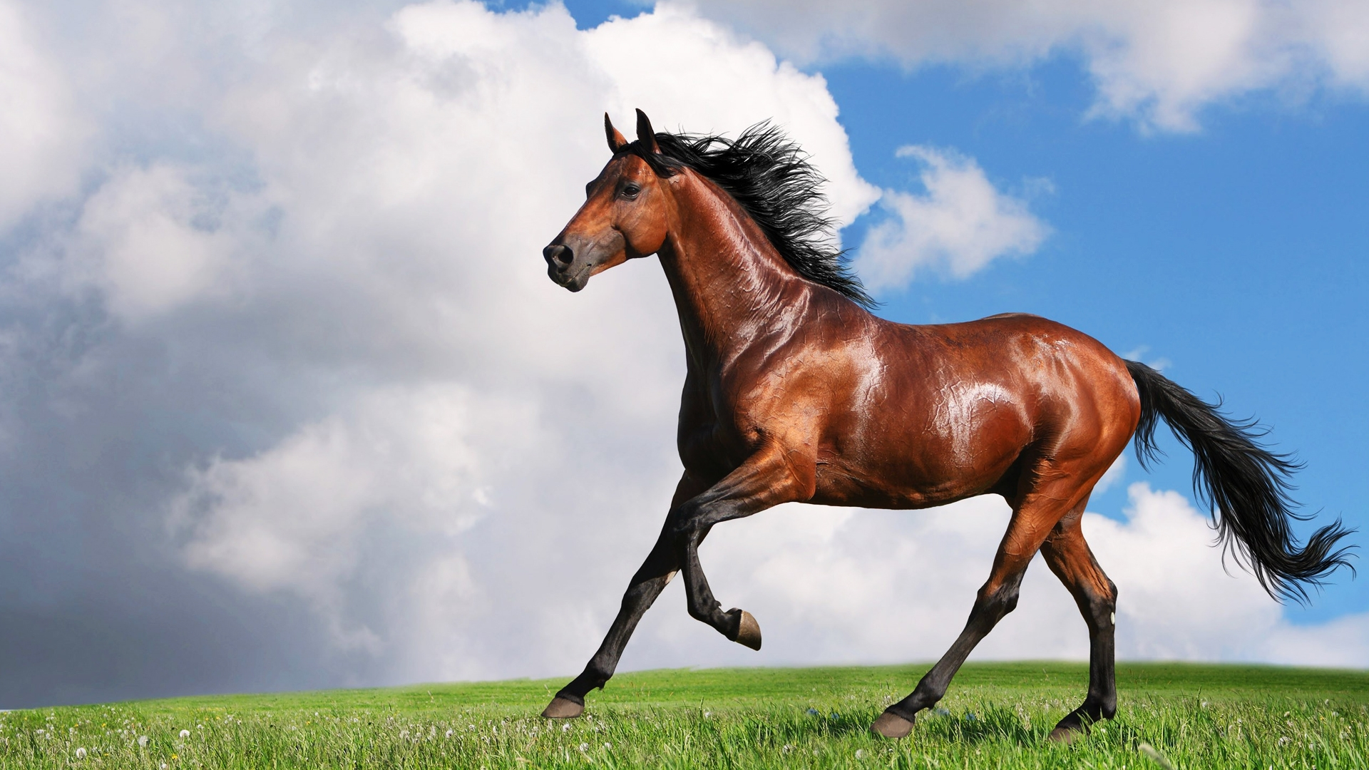 Horses High Definition Wallpapers. - photo#25