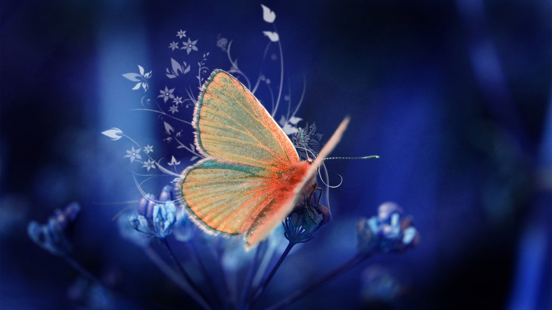 butterfly wallpapers flying - photo #18