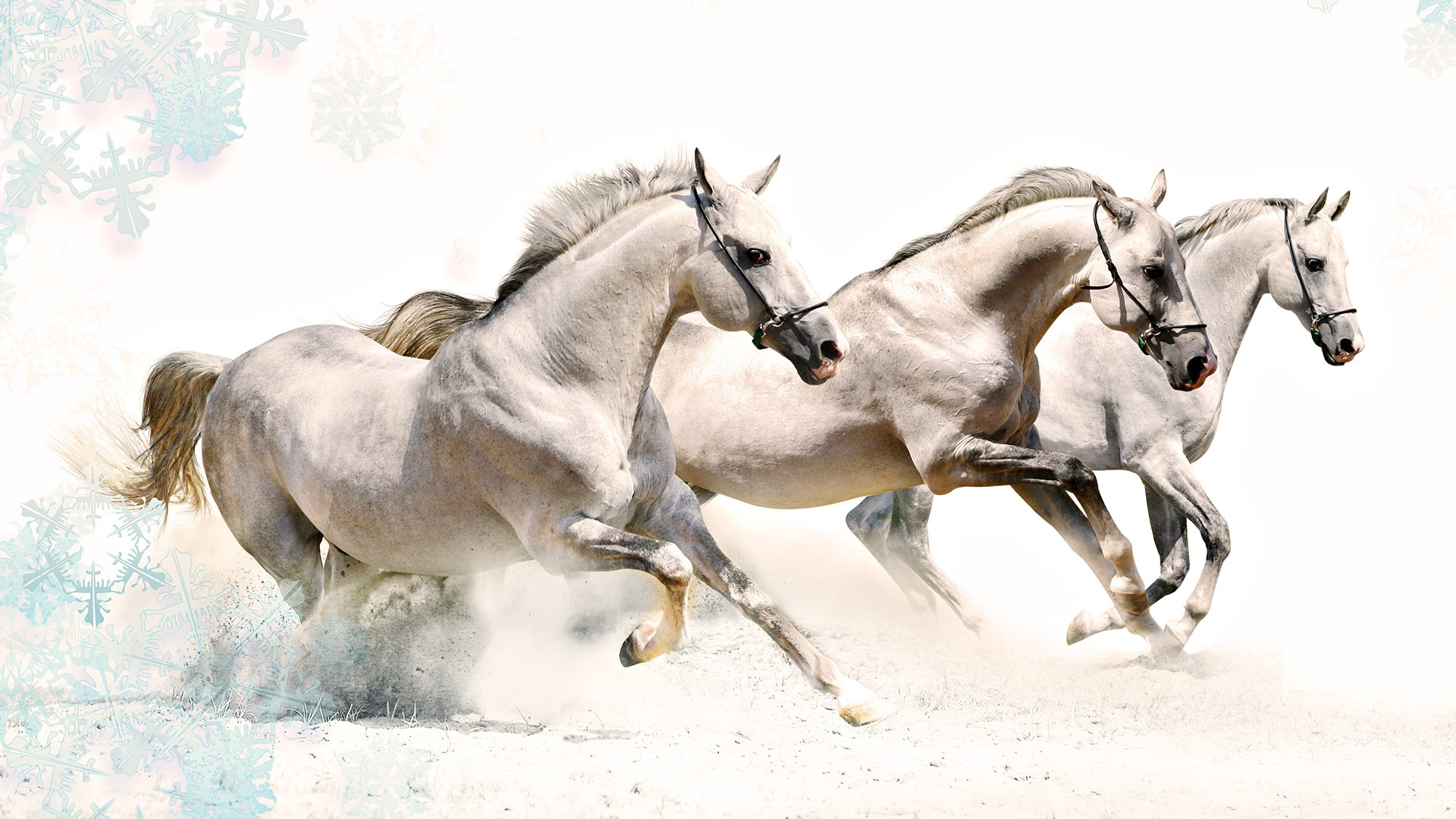 Horses high definition wallpapers horses in the beach altavistaventures Image collections