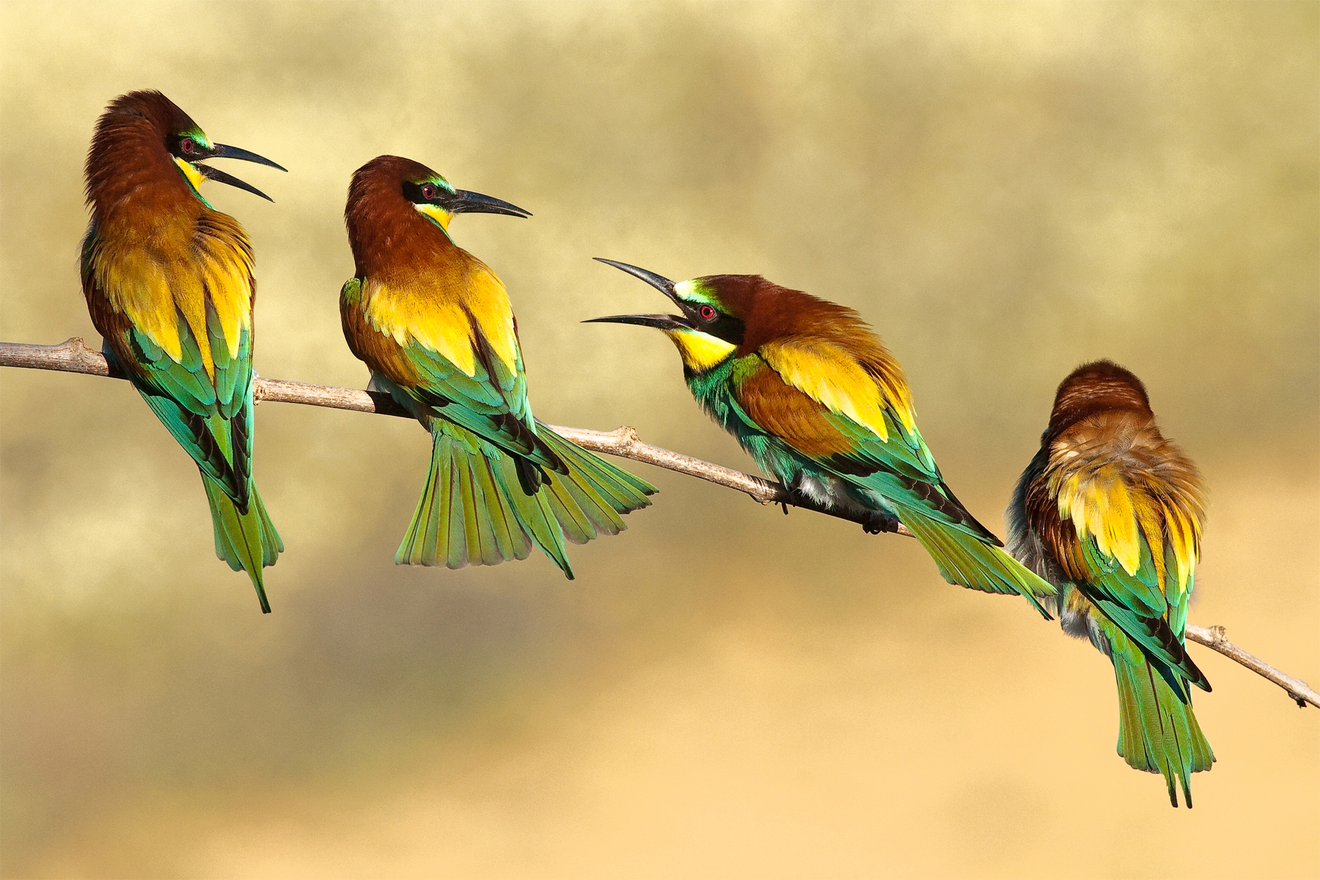 Sparrow hd wallpapers - Animal and bird hd wallpaper ...
