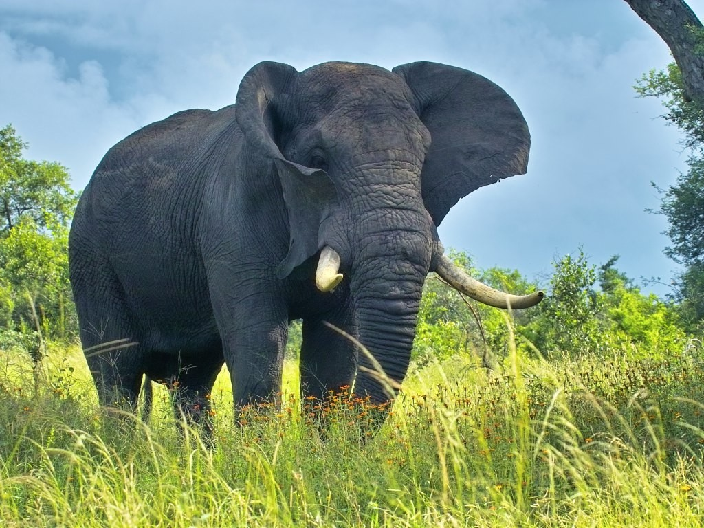 Wallpaper download elephant - Awesome Elephant