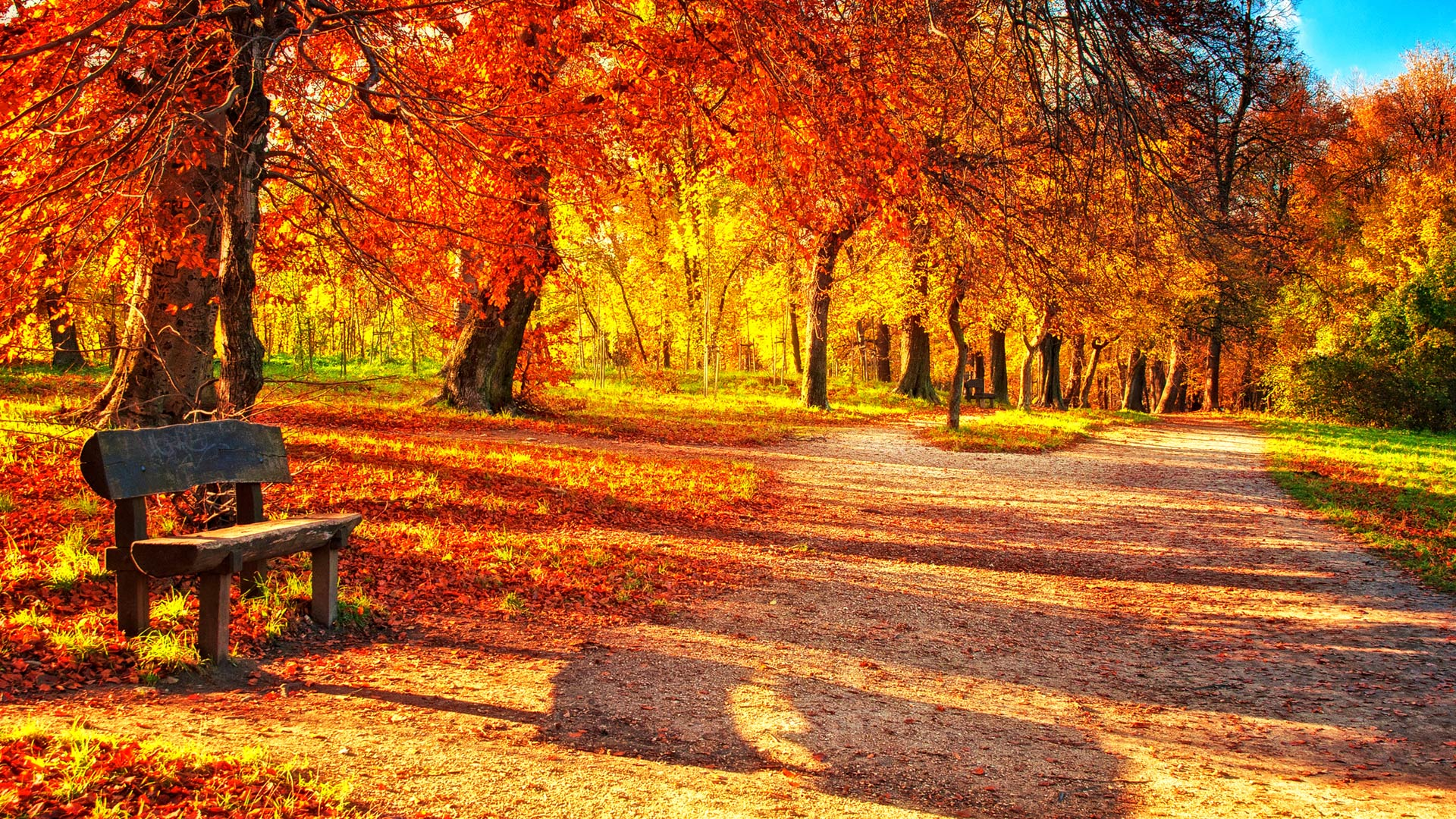 Fall In Love Wallpaper In Hd : cute Autumn Leaves HD Wallpapers.