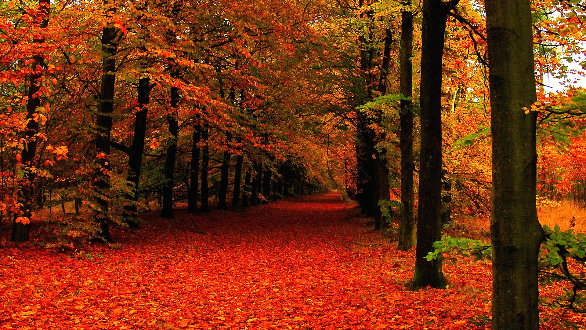 Hd 1080p Fall Wallpaper 79 Images: Cute Autumn Leaves HD Wallpapers