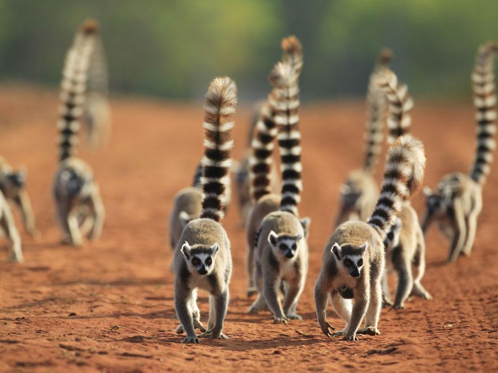 Safari Tours In Madagascar Cost