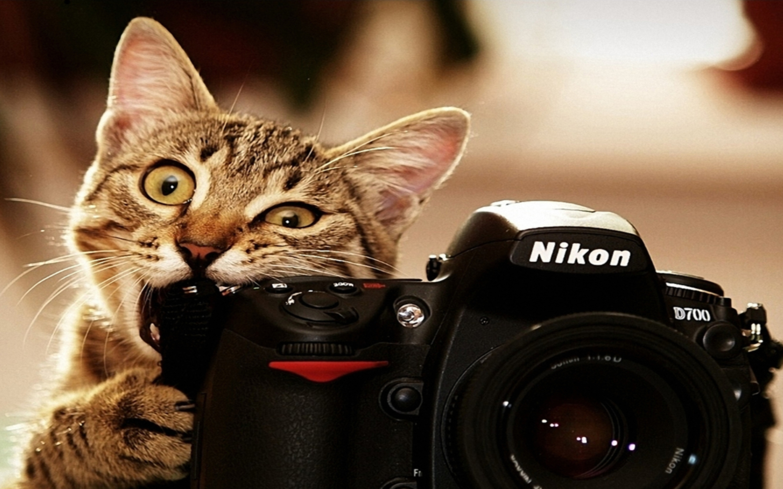 funny animals hd wallpapers