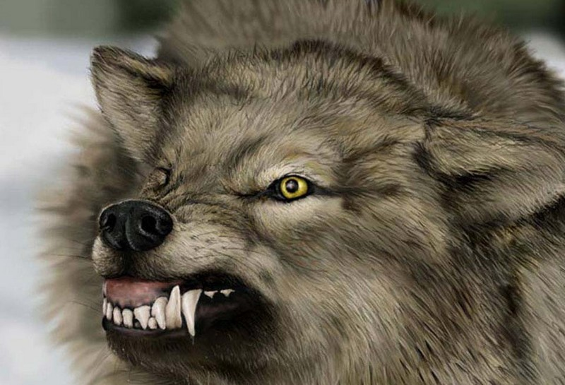 angry animals wallpapers - photo #4