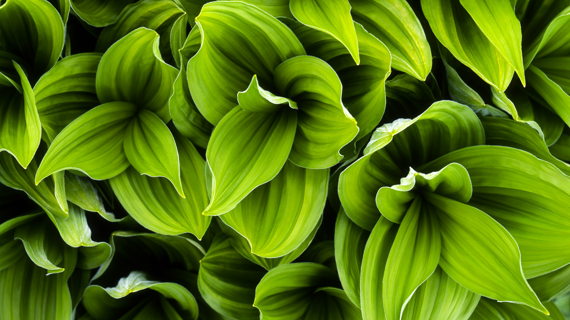 Awesome plants hd wallpapers for Green plants for garden