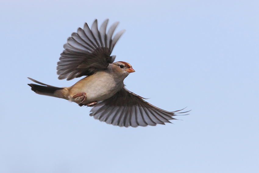 Sparrow HD Photos  Bird Wallpapers Images Pictures Download