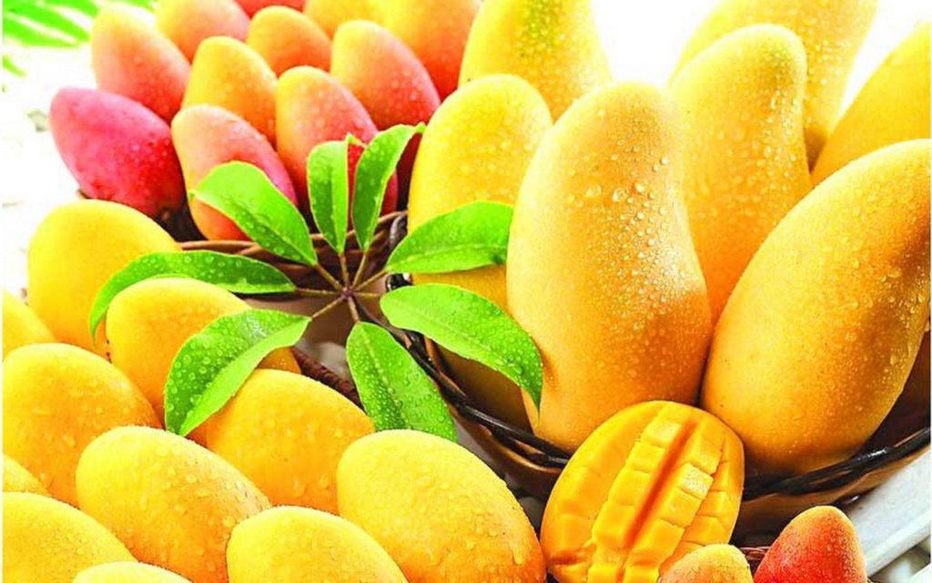 Mango fruit wallpaper free download